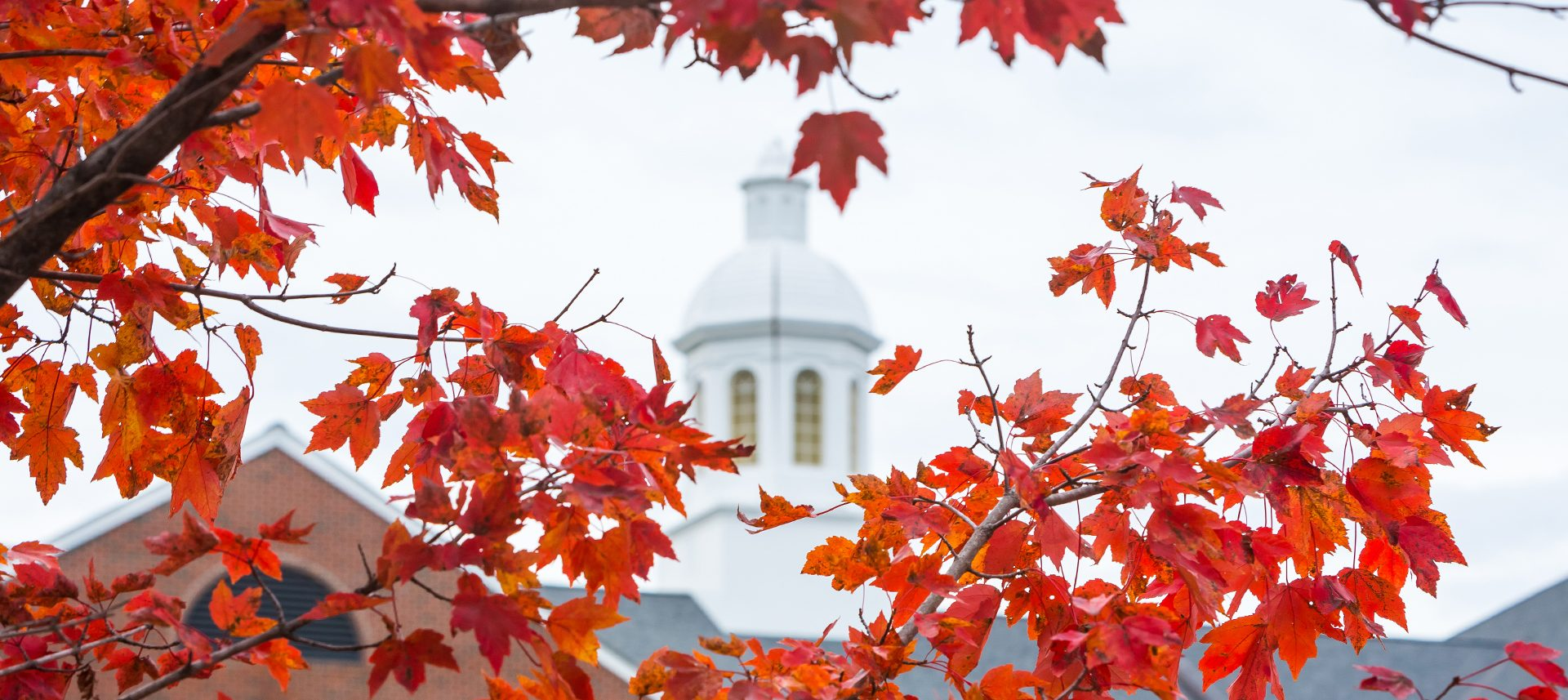 Warren Building cupola framed by fall leaves.