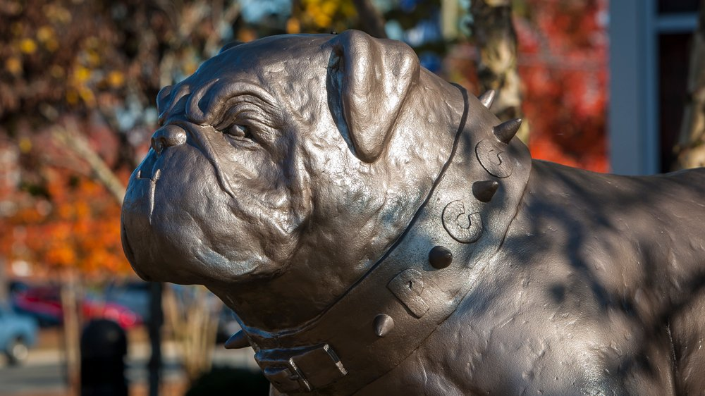 Sculpture of PCC's bulldog mascot, Bruiser with fall colors in the background.