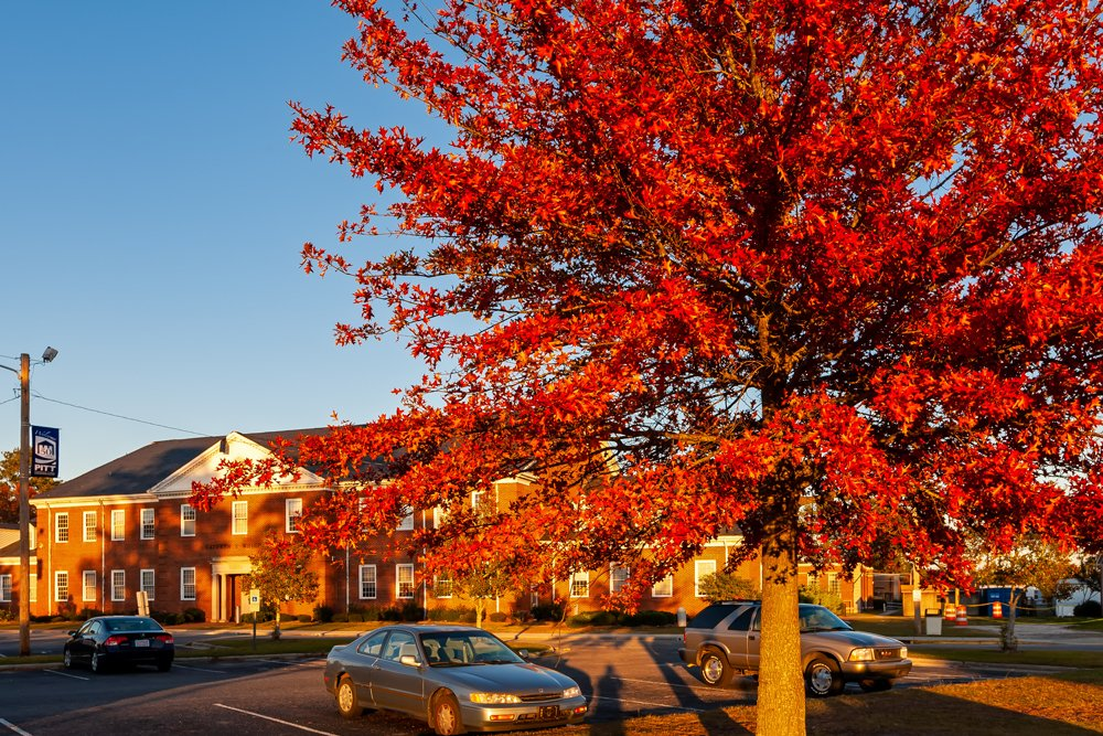Fall colors on display on PCC campus in front of the Whichard Building.